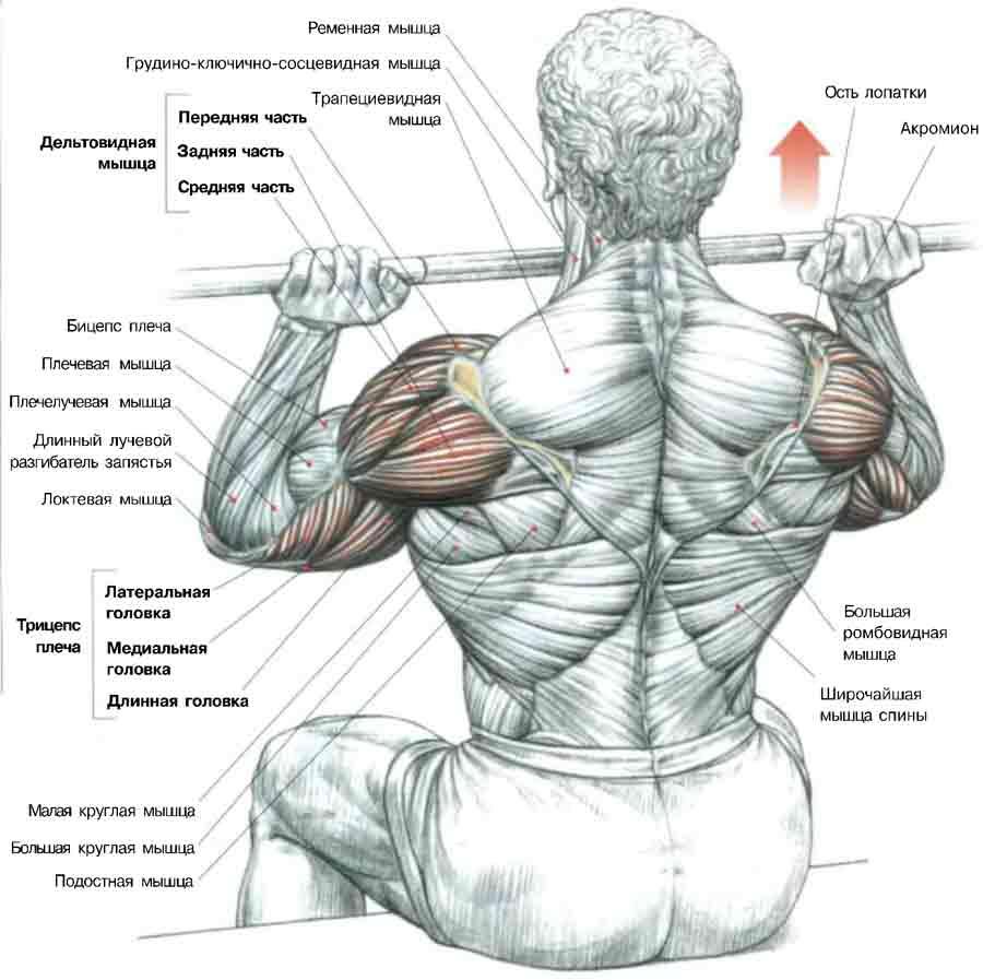 Как накачать плечи в тренажерном зале - d3f1