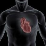 Исследование - влияние бодибилдинга на сердце, сердце и бодибилдинг