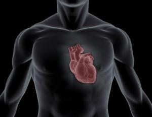 Исследование - влияние бодибилдинга на сердце