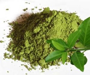 Экстракт зеленого чая фото